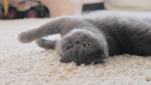 Szürke macska feküdt a szőnyegen a padlón.