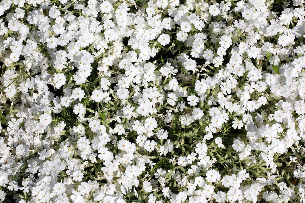 Цветы на ковре фото