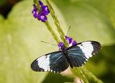 Půvabný motýl