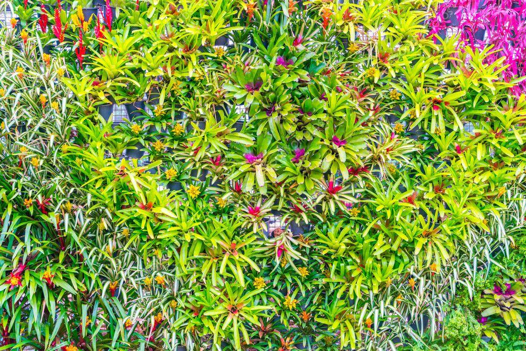Landscaped of flower garden .