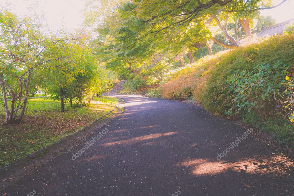 Way in forest .  ( Filtered image processed vintage effect. )