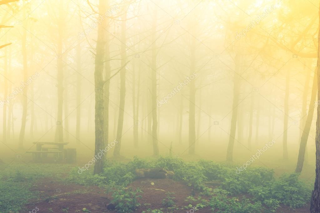 Forest tree during a foggy day ( Filtered image processed vintag