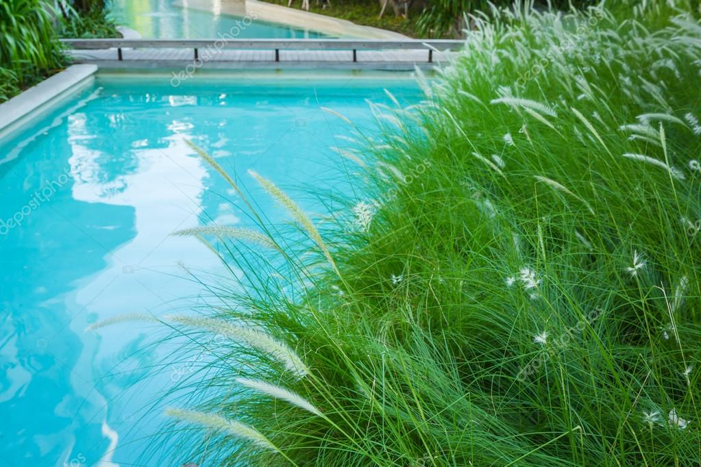 Close-up image of fresh spring green grass near swimming pool
