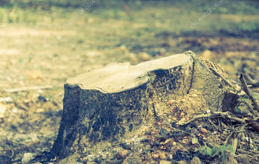 Rotting tree trunk