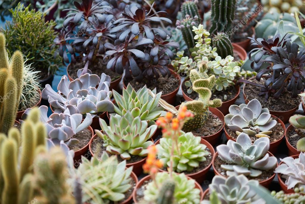 Succulent plants collection in pots