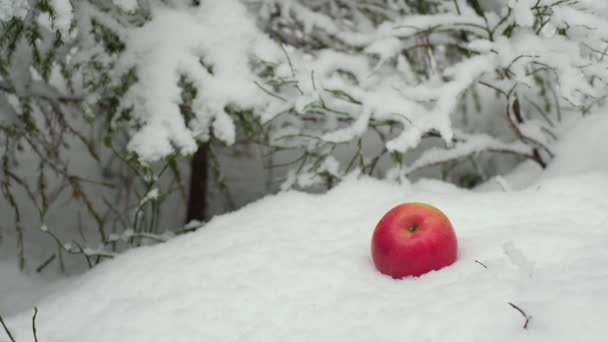 red apple on the background of a winter forest in the snow during snowfall
