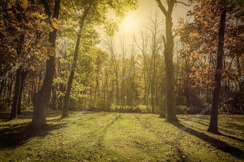Sunlight in the park - autumn season