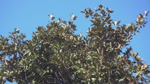 Magnolia strom detail 4