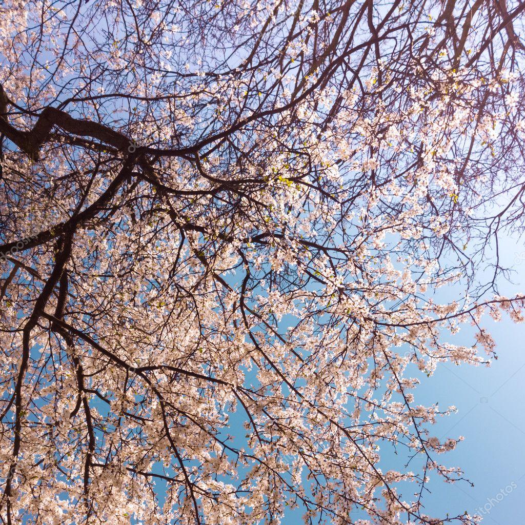 Pastel tones spring blossom in vintage polaroid effect