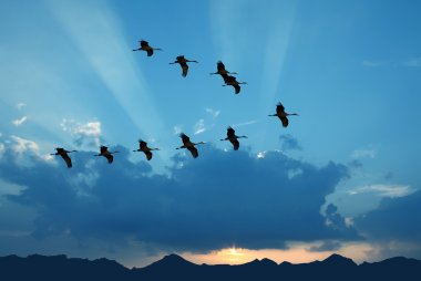 Birds flying against evening sunset in the background