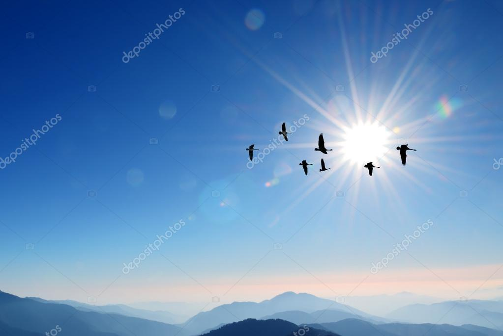 Flock of cranes spring or autumn migration over sunny sky