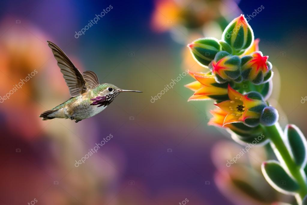 Small hummingbird near flowers frozen in action