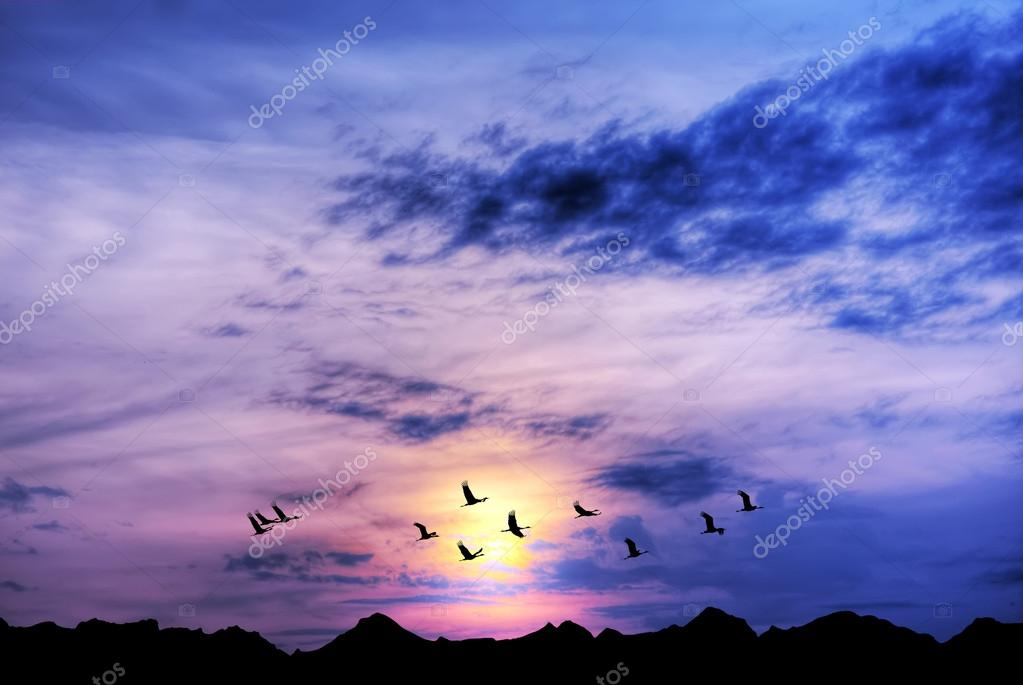 Landscape during purple sunset with flying birds