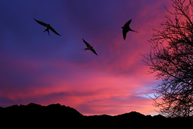 Barn swallow over night sky background