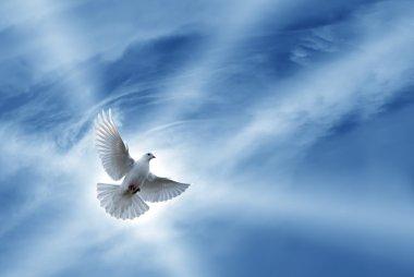 Beautiful Dove symbol of faith