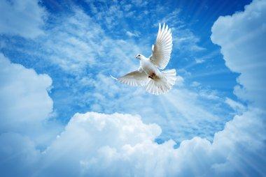 Beautiful dove in a blue sky symbol of faith