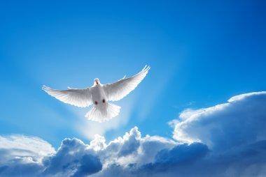 White Dove symbol of faith