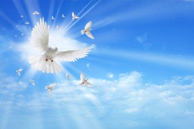 White dove in a blue sky, symbol of faith stock vector