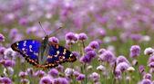 Motýl na panoramatický pohled Fialový květ