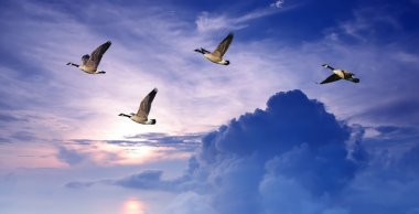 Birds flying over purple sky panoramic view