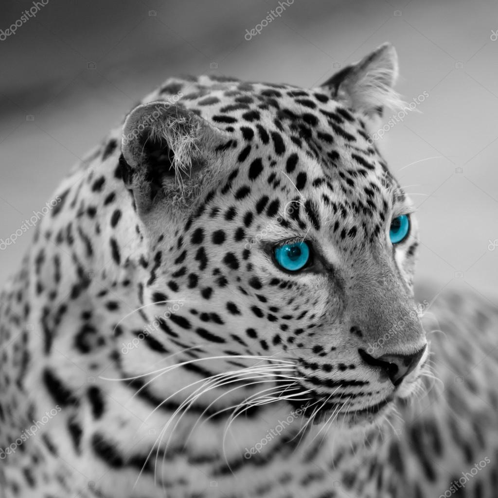 White Jaguar Cat: Stockfoto © Piyagoon #66495693