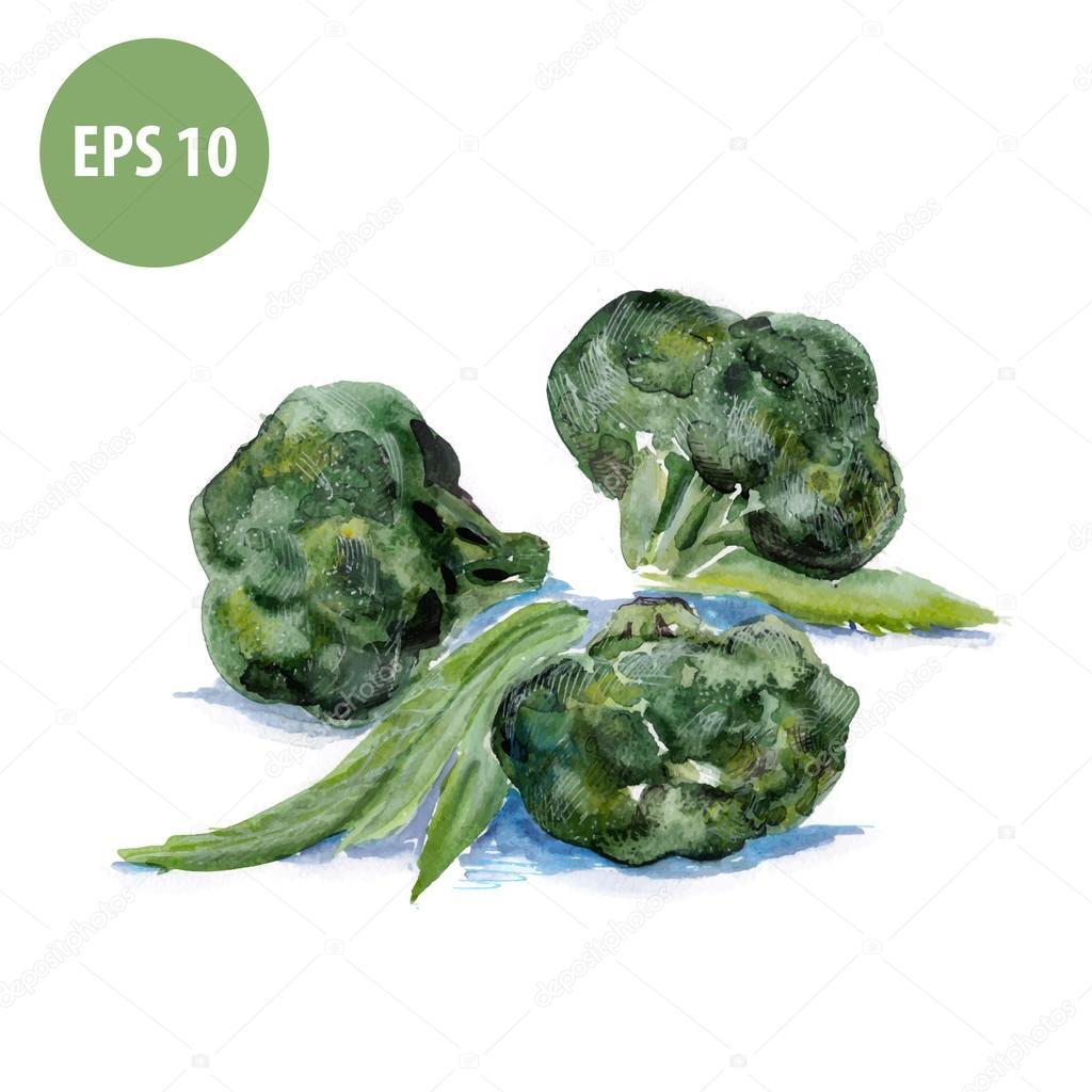 Aquarell Brokkoli, Gemüse Malerei — Stockvektor © lemyppp #60474691