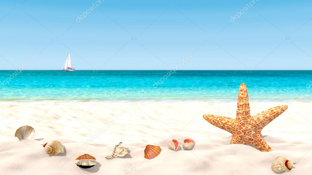 Shells and starfish on a sandy beach with a blurred background in order to focus on the foreground.