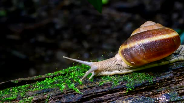Snail on wood.