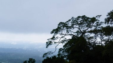 Tropical tree and mist on mountain