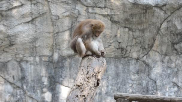 opice na větvi