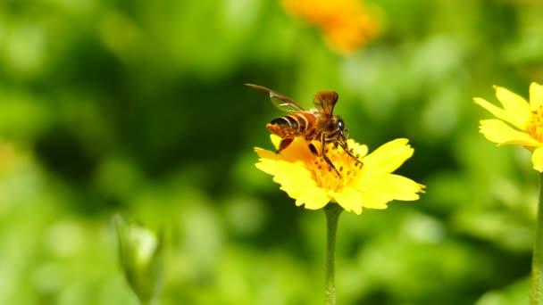 Biene auf gelber Blume.