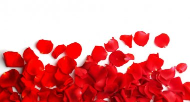 Red rose petals isolated on white stock vector