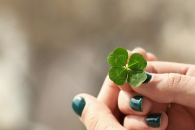 Four leaf clover in female hands