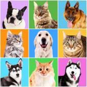 Fotografie Hunde und Katzen-Porträts