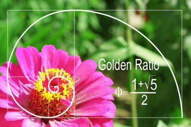 Illustration of golden ratio in nature.