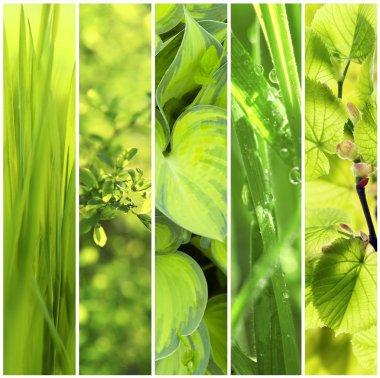 "Картина, постер, плакат, фотообои ""зеленый фон цветы природа программа"", артикул 109771886"