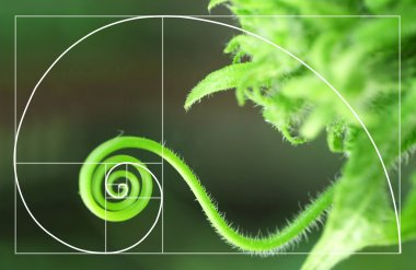 spiral arrangement in nature