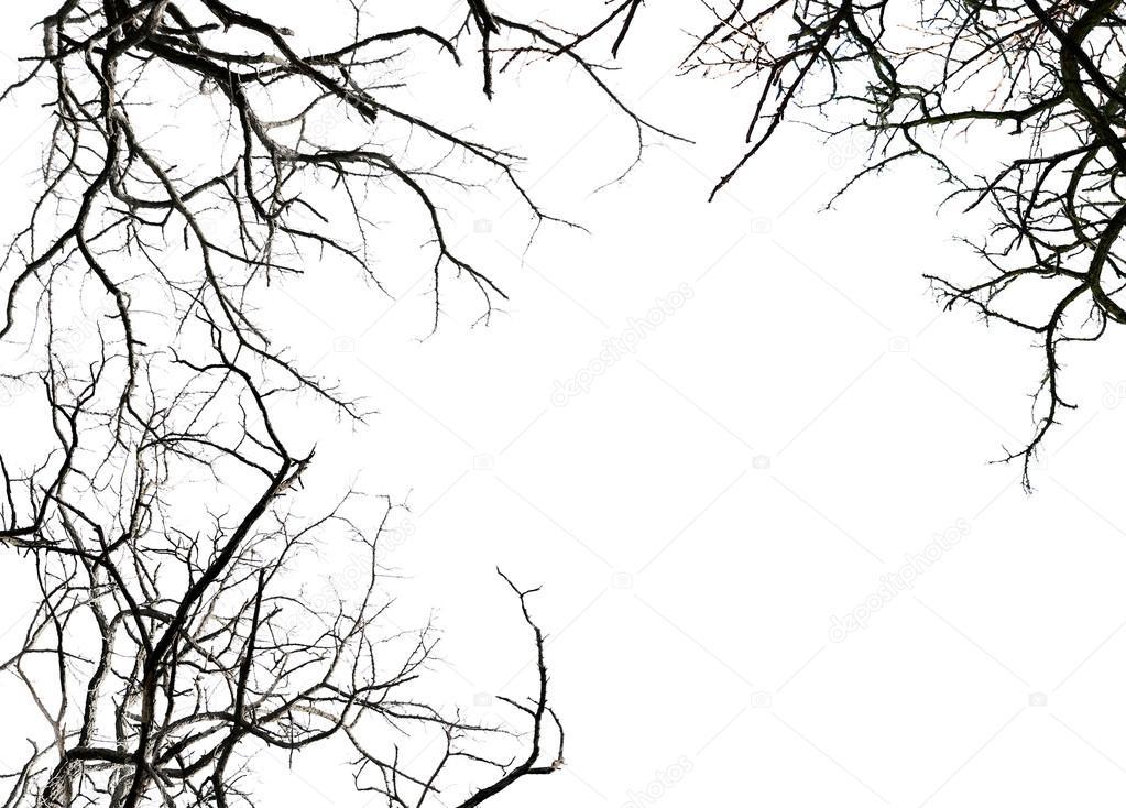 Ramas De Los árboles Sin