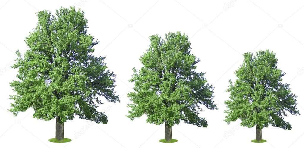 5d6c303c067d Fila di alberi che crescono in dimensioni — Foto Stock © belchonock ...