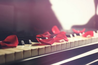 Petals of rose on piano keys