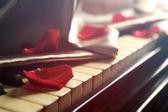 Okvětní lístky růže na klávesy