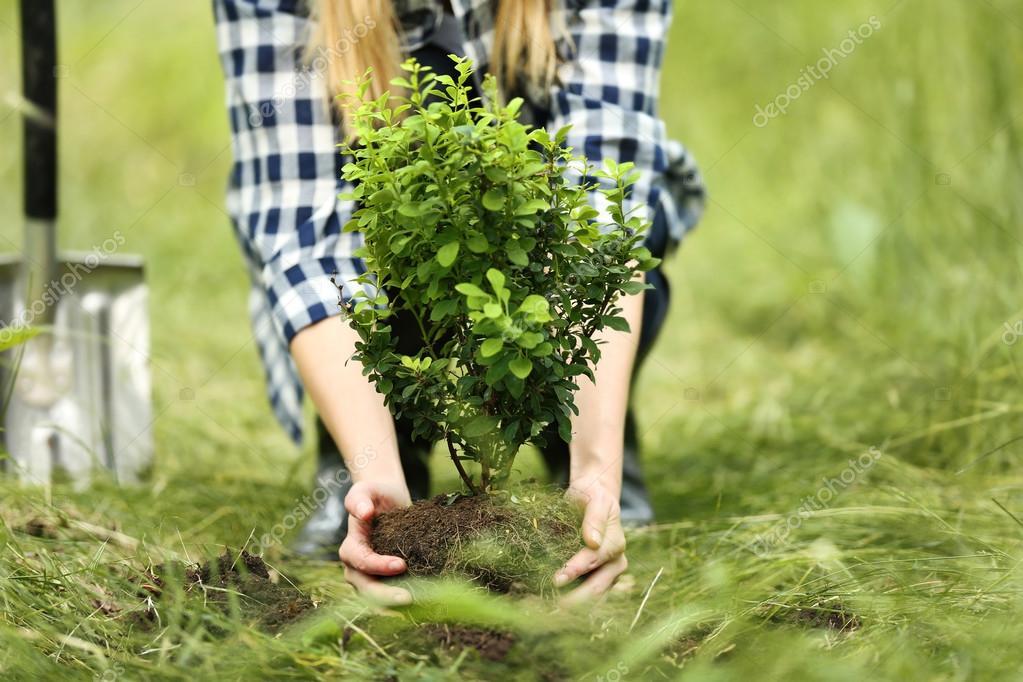 Plantar rboles de mujer fotos de stock belchonock for Arboles para plantar en invierno