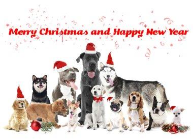 Funny christmas dogs.