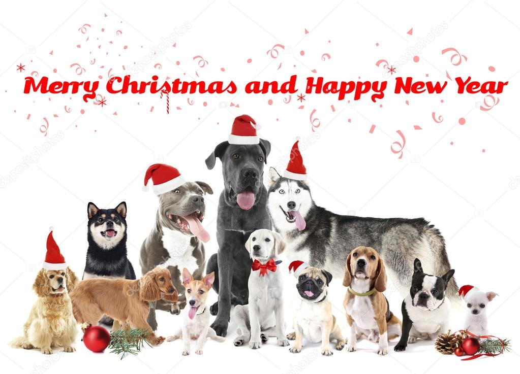 funny christmas dogs merry christmas and happy news year photo by belchonock