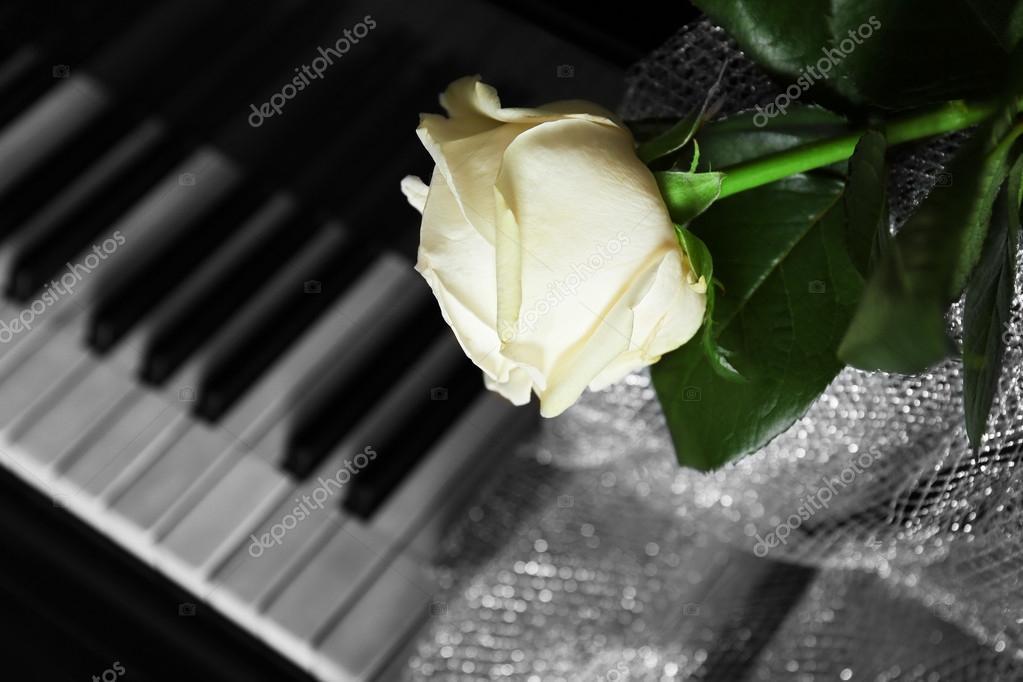 """Résultat de recherche d'images pour """"rose blanche et piano blanc et noir"""""""