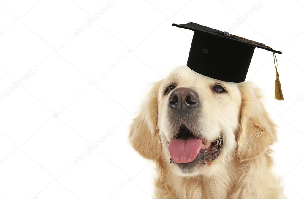 Best Graduation Cap Black Adorable Dog - depositphotos_120317034-stock-photo-adorable-dog-with-black-graduation  Gallery_167463  .jpg