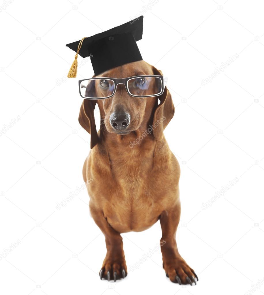 Best Graduation Cap Black Adorable Dog - depositphotos_120317050-stock-photo-adorable-dog-with-black-graduation  Gallery_167463  .jpg