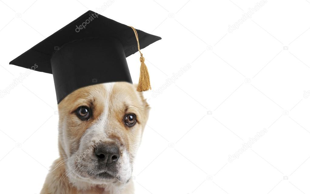 Popular Graduation Cap Black Adorable Dog - depositphotos_120317052-stock-photo-adorable-dog-with-black-graduation  Picture_471873  .jpg