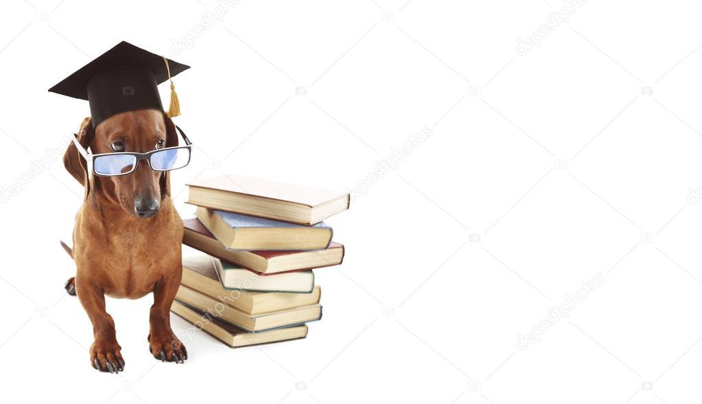 Best Graduation Cap Black Adorable Dog - depositphotos_120317110-stock-photo-adorable-dog-with-black-graduation  Gallery_167463  .jpg