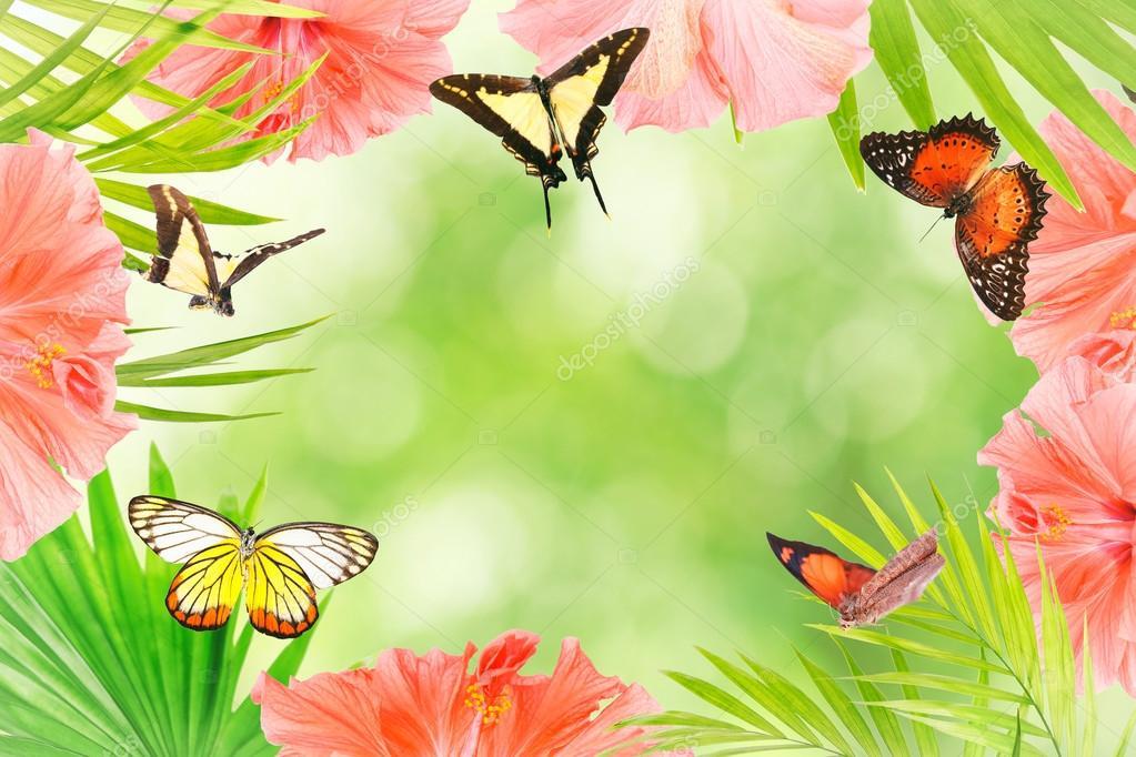 Fotografias De Mariposas Y Flores: Imágenes: Hermosas De Mariposas Y Flores
